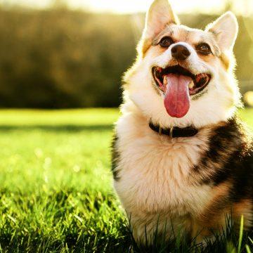 5 claves para prolongar los años de vida de tu mascota