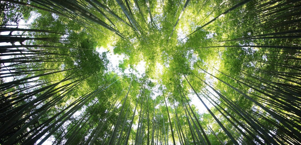 HP y Conservation International unen fuerzas con las comunidades locales para restaurar parte de la selva amazónica