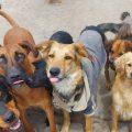 Tottus realiza campaña en favor de alberguep para perros sin hogar